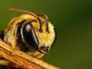 Бизнес идеи, как заработать на пчелах