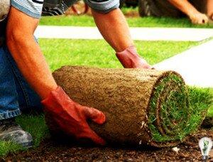 Бизнес идеи, обустройство газонов