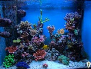 Бизнес идеи, продажа аквариумов и кораллов